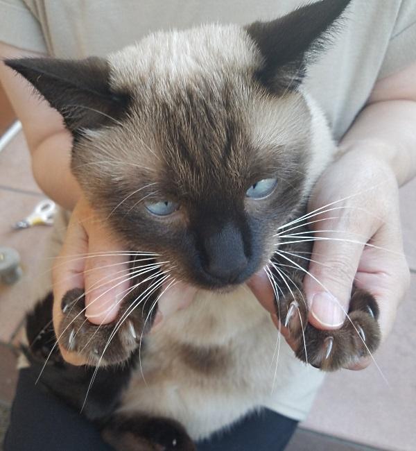 爪切りをする猫の写真