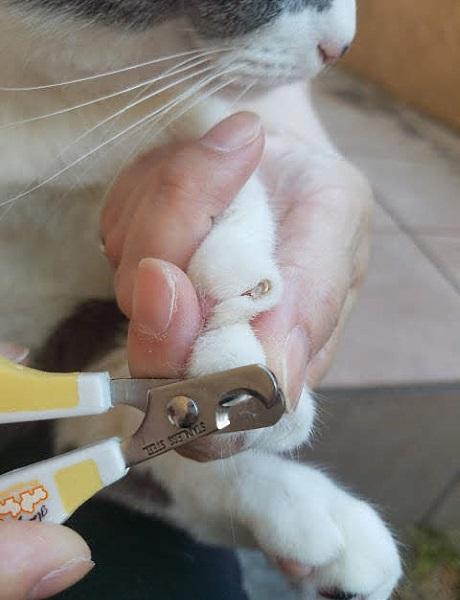 猫の爪を切っている写真