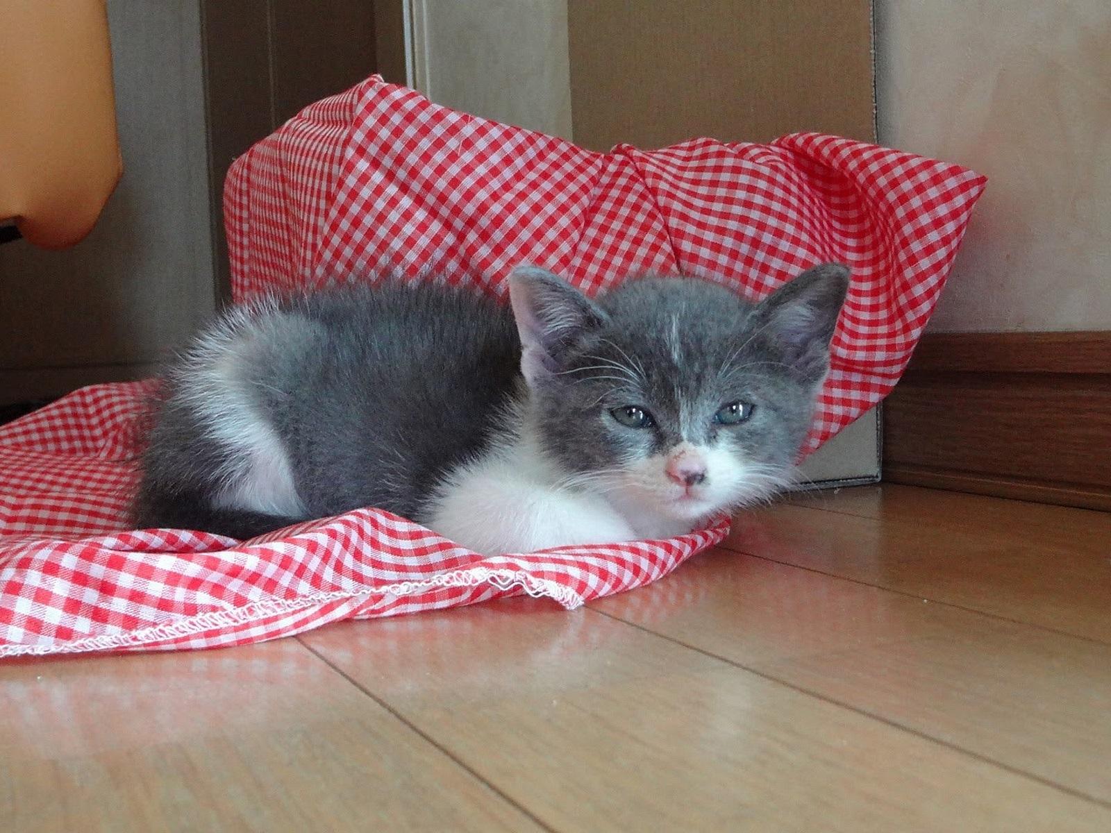 家に来たばかりの子猫の写真