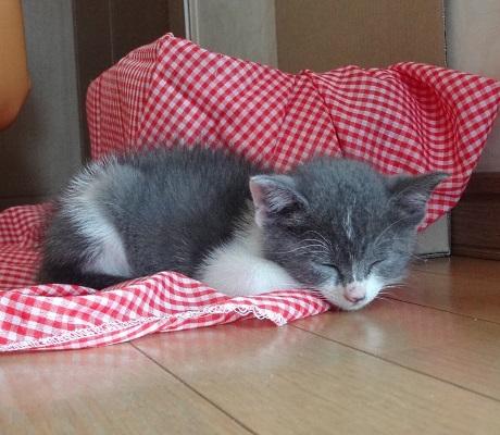 丸まって眠ってしまった子猫の写真