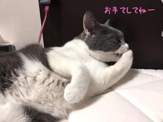 手をグルーミングする猫の写真