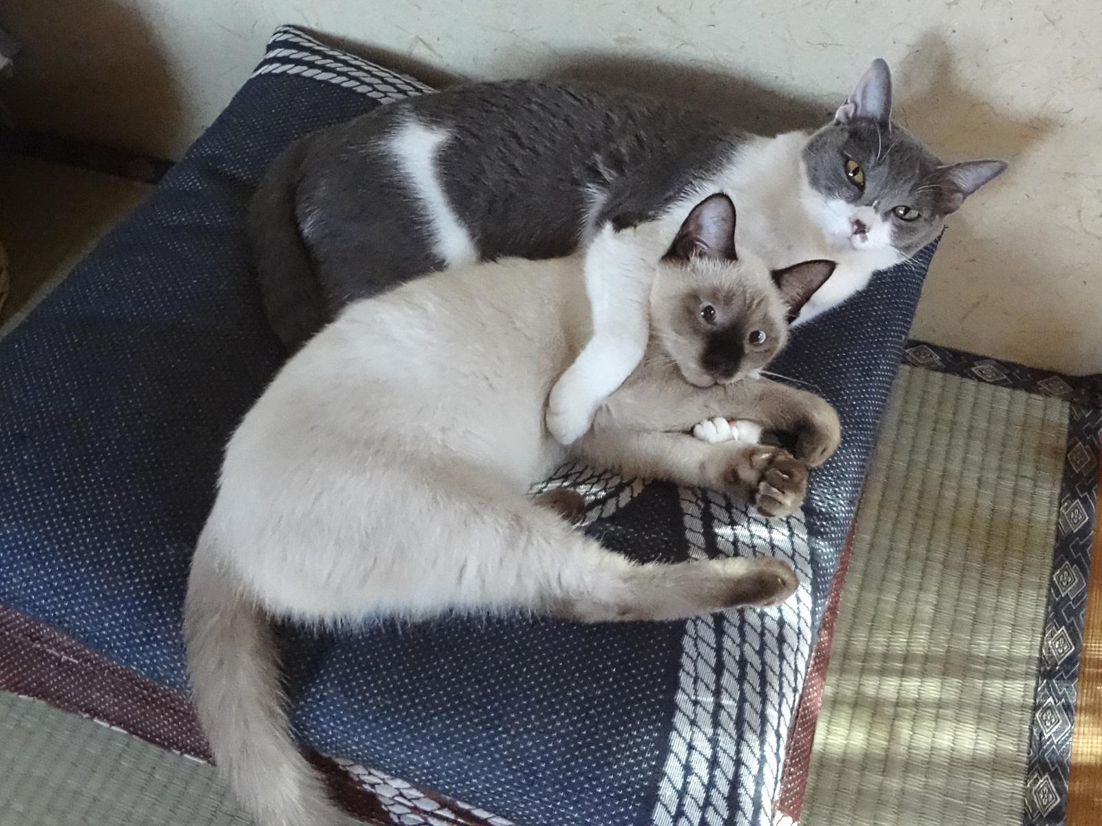 寄り添っている猫たちの写真