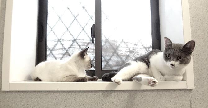 バスルームで遊ぶ猫たちのようす