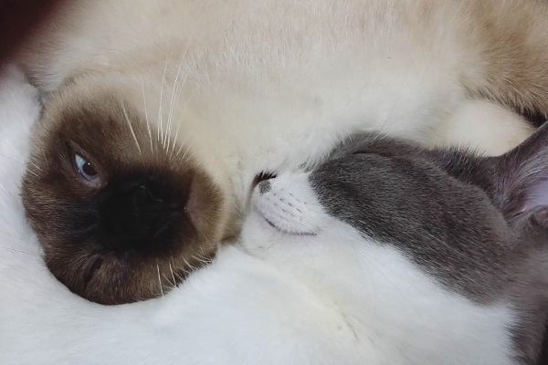 変顔で先住猫と眠っている子猫の写真