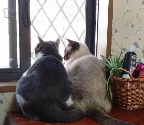 窓から外を眺めている猫たちの写真