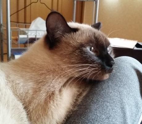 膝に乗って甘えている猫のようす