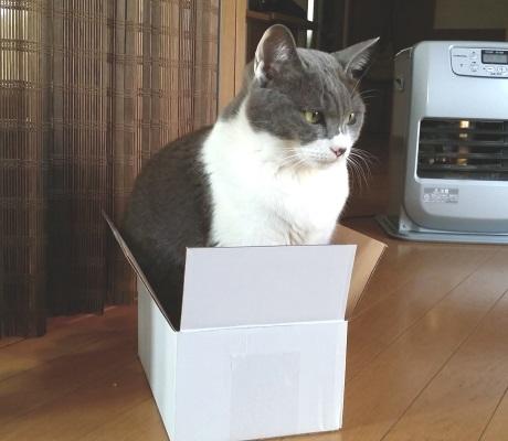 箱が小さすぎて入れていない猫の写真