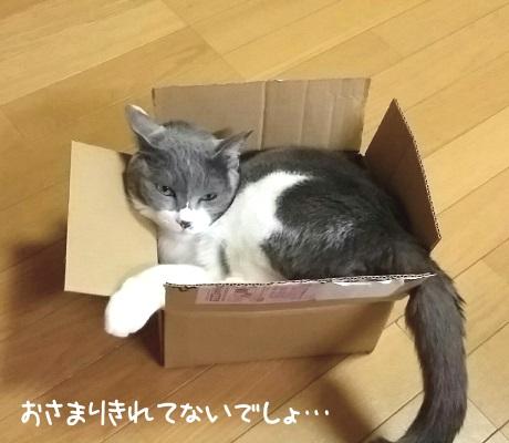 小さな箱に入っている猫の写真