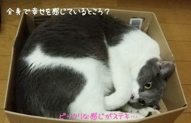 ピッタリサイズの箱に入っている嬉しそうな猫の写真