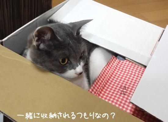 整理中の箱に入り込んで邪魔をする猫の写真