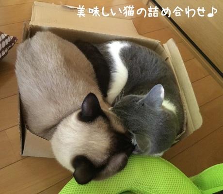 1つの箱に仲良く入っている猫の写真