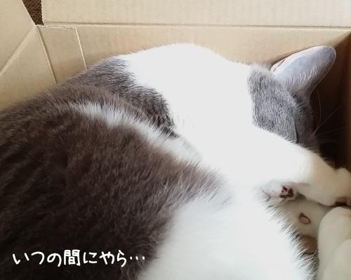 箱の中で眠ってしまった猫の写真