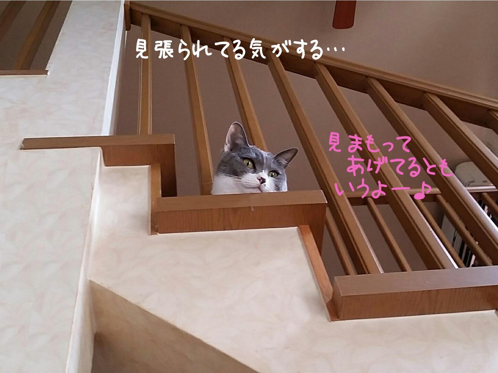 階段の上から見下ろしている猫の写真