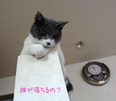得意そうに下を見下ろす猫の写真