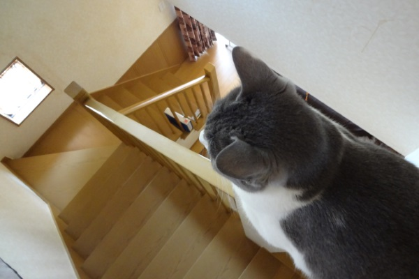 階段のポールに登っている猫の写真