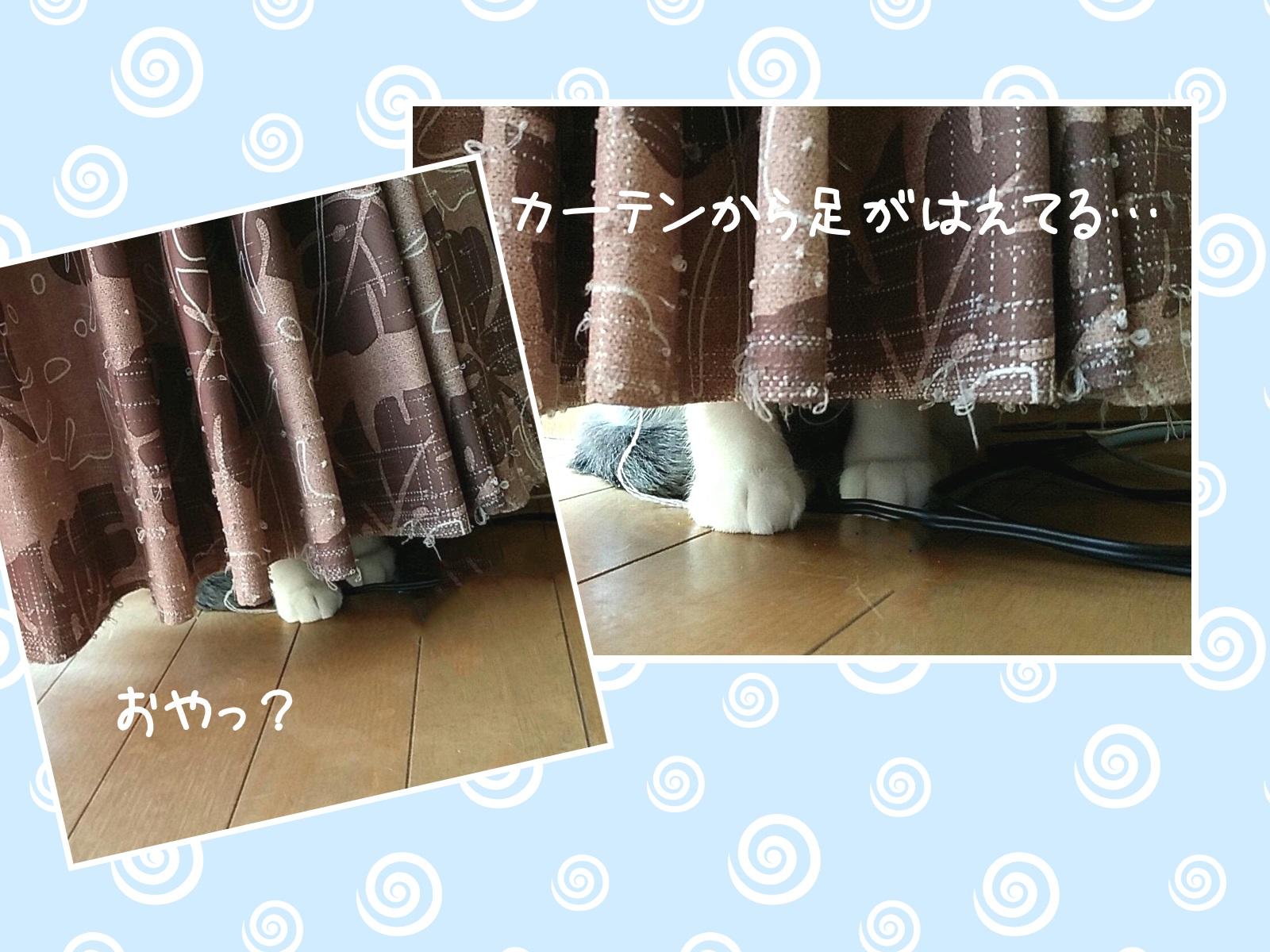 カーテンに隠れている猫の写真