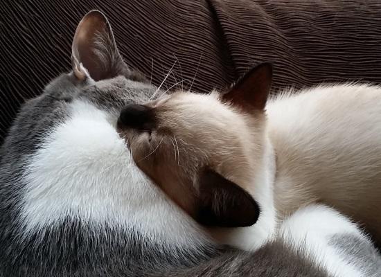 先住猫に噛みつかれている子猫の写真