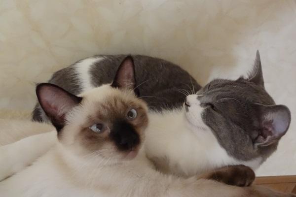いつも一緒にいる猫たちのようす