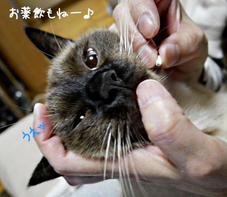 危険な状態を察知して抵抗する猫の写真