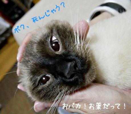 薬を飲みこんでしまったときの猫のようす