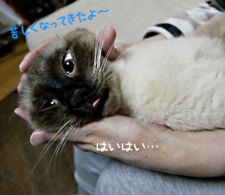 少し安心した様子の猫の写真