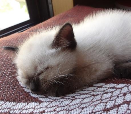 座布団の上で眠っている子猫の写真