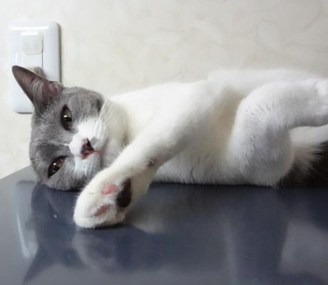 寂しそうな先住猫の写真