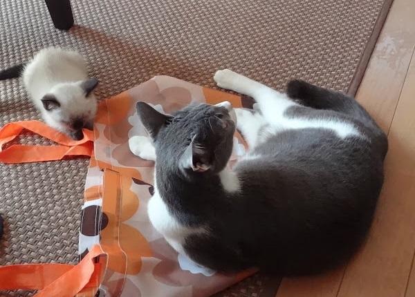 少し距離が縮まったようすの2匹の猫