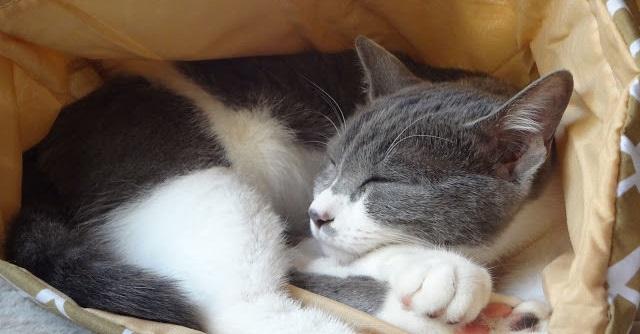 袋で眠っている猫の写真