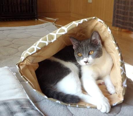 ホームセンターで買った猫用の袋に入って遊ぶ猫の写真