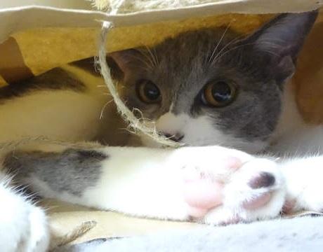 紙袋に入って遊ぶ猫の写真