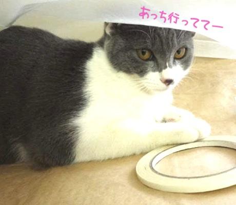 ゴミ袋から出たくない猫の写真