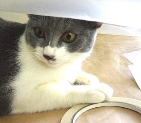 ゴミ袋で楽しそうに遊ぶ猫の写真