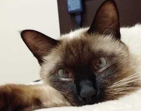 ぼんやり寝転ぶ猫の写真