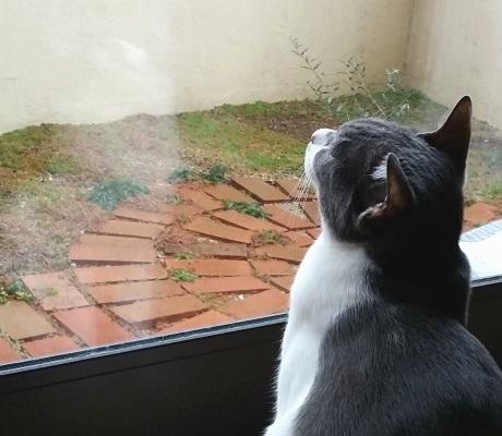 ぼんやりと空を見ている猫の横顔の写真