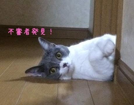 不審者を見張っている猫の写真