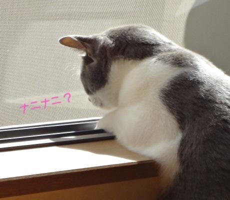 身を乗り出してベランダの落ち葉を見ている猫の写真