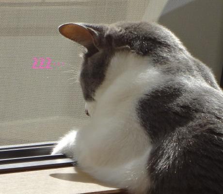 ベランダを眺めていて眠ってしまった猫の写真