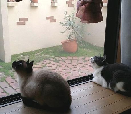 鳥を見つけて身構える猫たちの写真