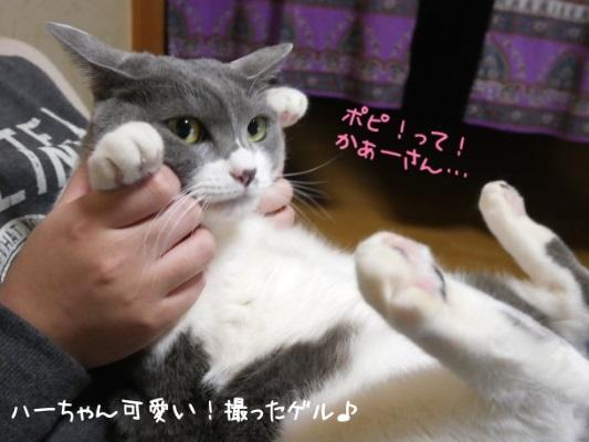 助けてほしそうに見る猫の写真
