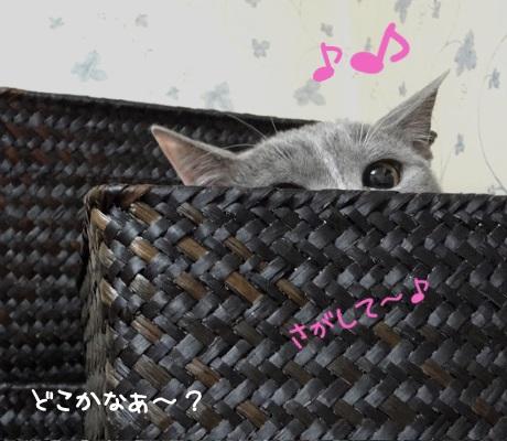 かごに隠れて様子を伺っている猫の写真
