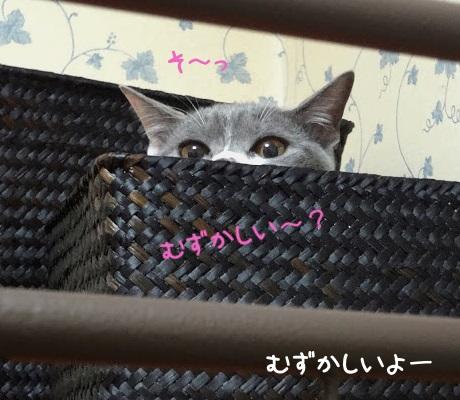 かごからそっと覗いている猫の写真