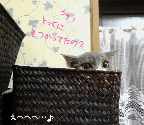 かごに隠れているのが見つかってしまった猫の写真