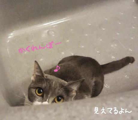バスタブに隠れている猫の写真