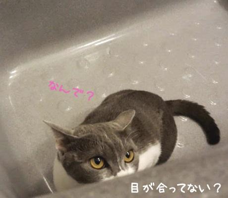 バスタブに隠れて見ている猫の写真