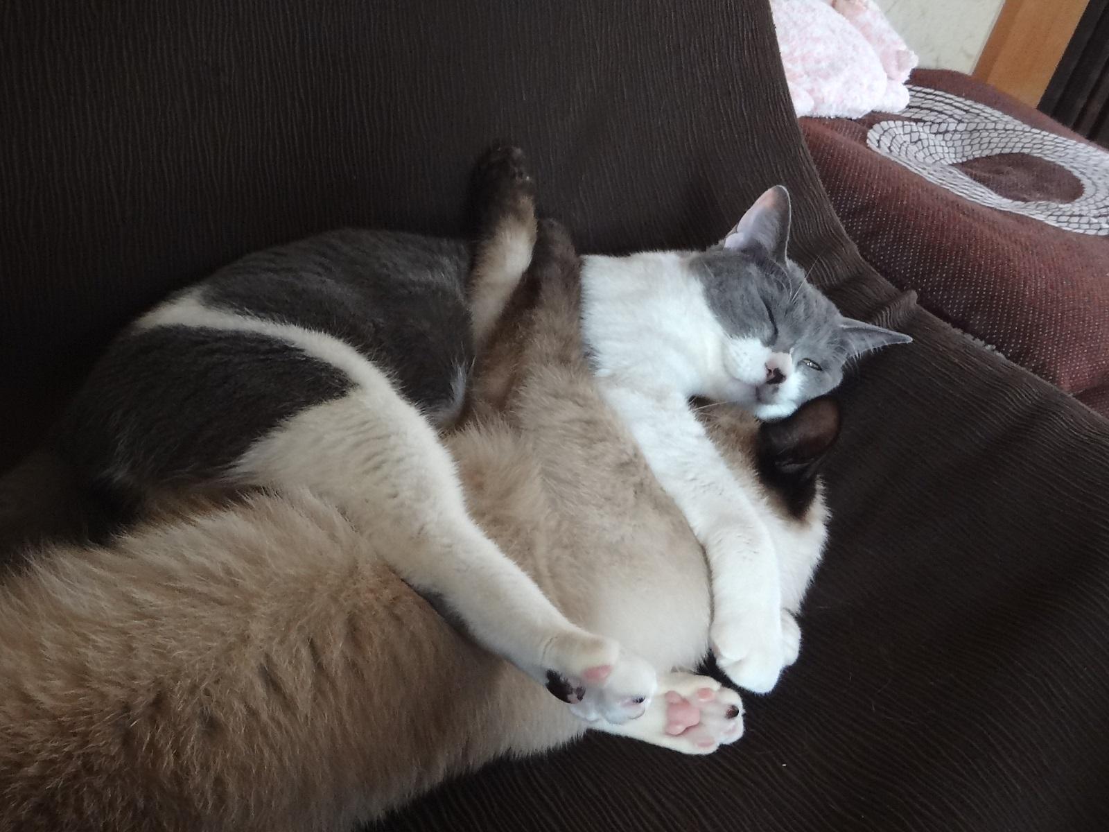 抱きついて寝ている猫の写真