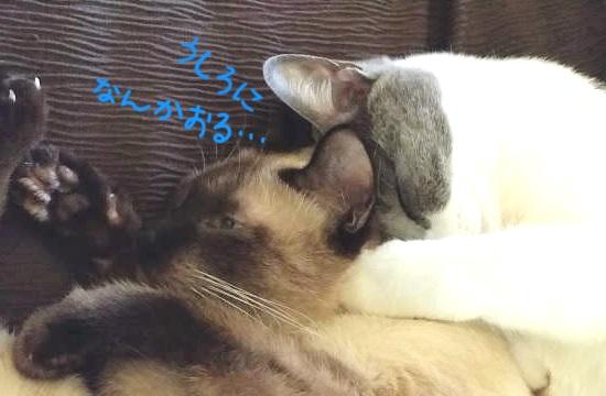 子猫に甘えて寝ているお姉さん猫の写真