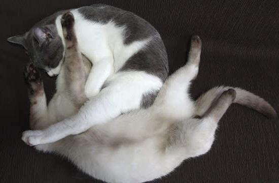 絡まって寝ている猫の写真