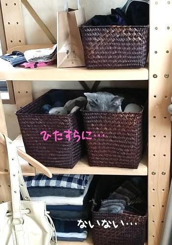 棚に隠れている猫の写真