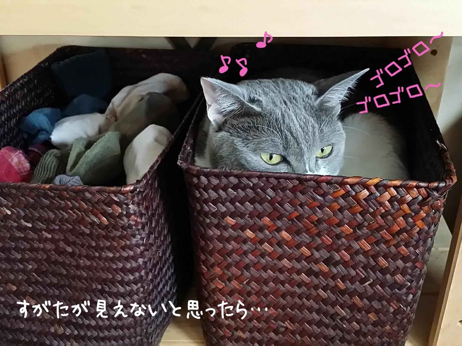 棚に隠れて潜んでいる猫の写真